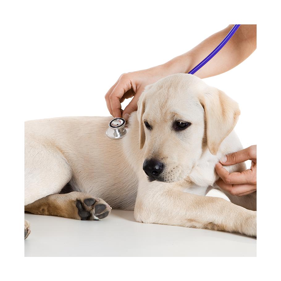 http://brasiltelemedicina.com.br/wp-content/uploads/2016/07/dog-exame.png